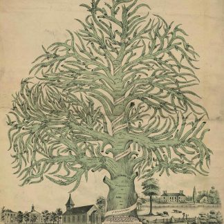 Drawing of very large tree with many wavy branches and words written all throughout. Small town with buildings down below.