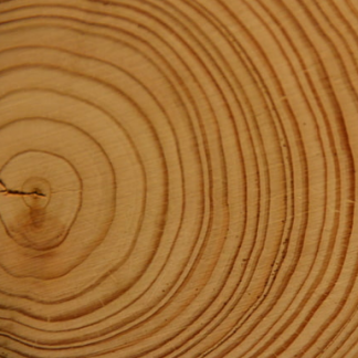 Sanded wood cross-section with dark tree rings.